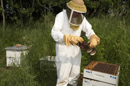 My Brother's Beekeeper