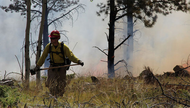 Daniel Godwin Wins National Award for Fire Ecology Work