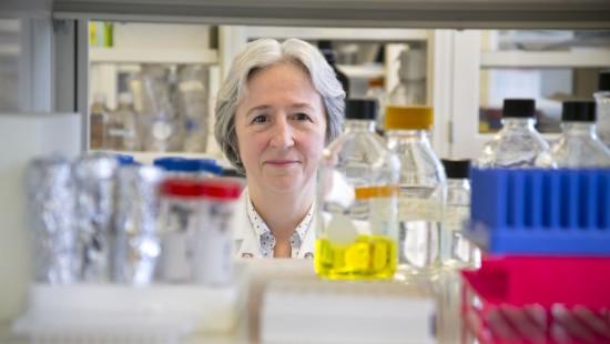 UMKC bone scientist receives national award