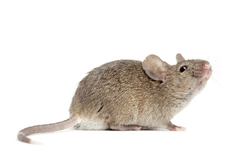BPA Can Adversely Affect Parenting Behaviors in Mice