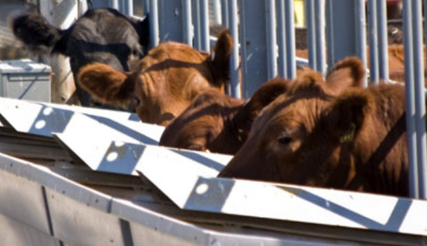 Northeast Missouri Beef Producers Honor Stock Buyers
