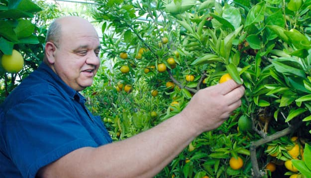 From citrus to cows, SW Mo. family grows own food